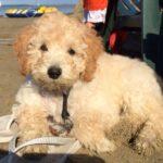 summer als pup
